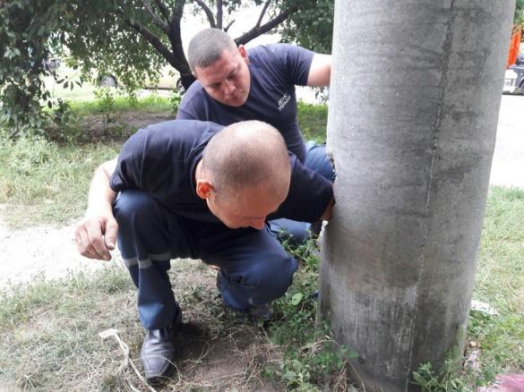 Черкаські рятувальники витягли кошеня зі стовпа ліхтаря (ФОТО)
