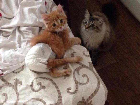 У Черкасах кота, якого ледь не приспали, відправили до США