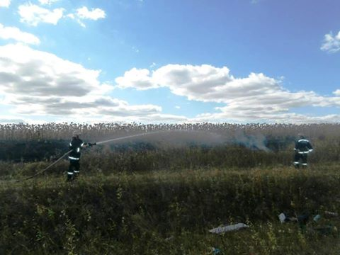 На Черкащині від вогню врятували поле із соняшником