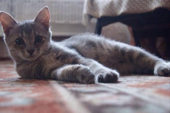Безпритульні черкаські котики шукають турботливих господарів