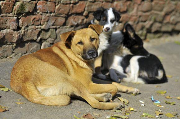 На Черкащині прийняли історичне рішення щодо безпритульних тварин