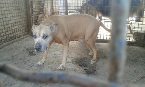 Черкаські волонтери шукають господарів для собаки з важкою долею