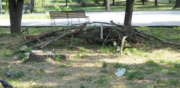 Черкаський парк заполонили хащі та сміття (ВІДЕО)
