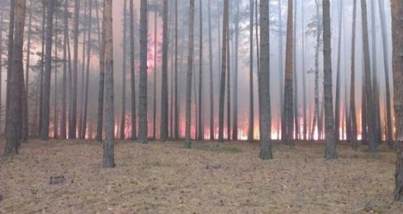 Через необережність людей на Черкащині стається більше пожеж у лісах