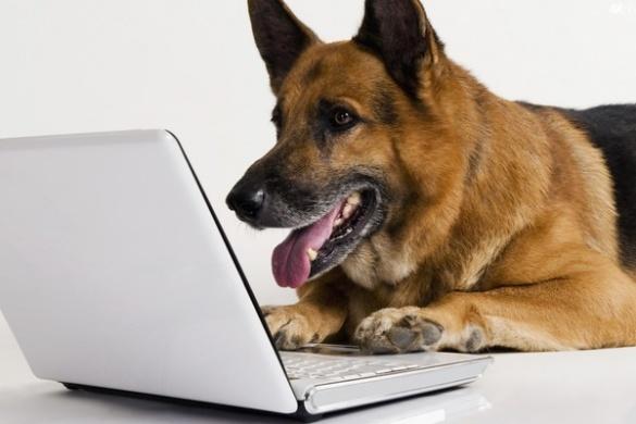 Черкаський кінолог вчить господарів виховувати своїх собак по