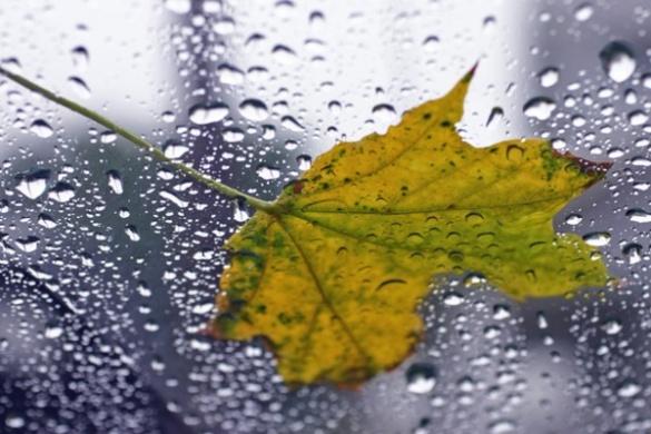 Наступного тижня на Черкащині прогнозують похолодання та дощі