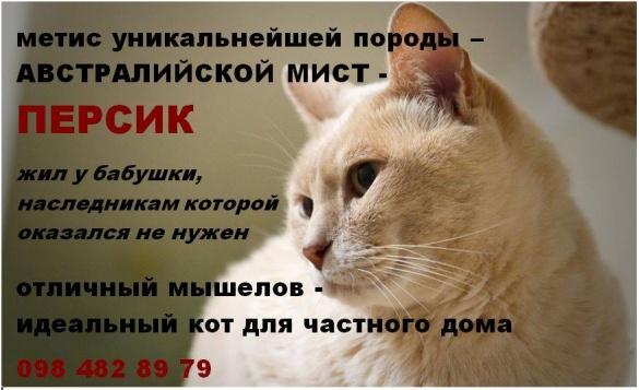 У Черкасах шукають дім для незвичайного кота