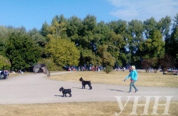 У Черкасах відбувся чемпіонат України з кінологічного спорту