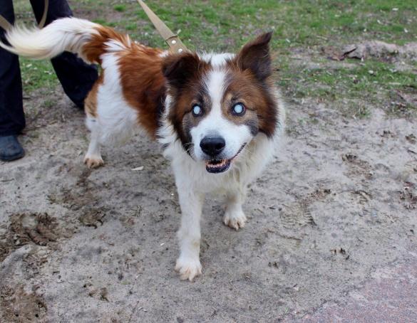 Черкаські волонтери шукають господаря для унікальної собаки (ФОТО)
