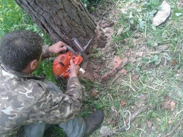 У Черкасах продовжують спилювати дерева