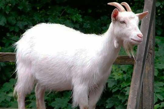 На Черкащині у восьмиметровий колодязь впала коза