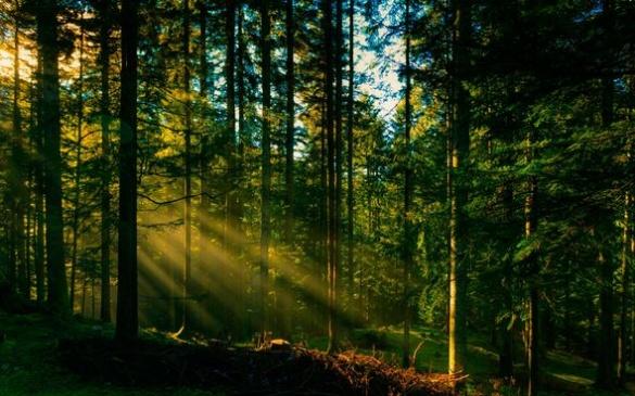 На Черкащині крадіїв дров відстежують за допомогою відеокамер
