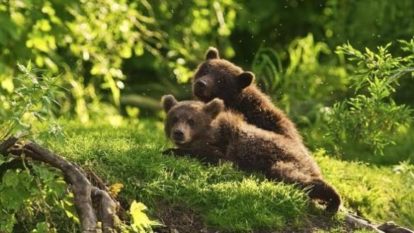 Черкаський зоопарк поповнився новими жителями