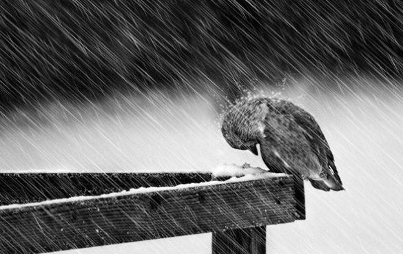 Сюрприз від погоди. На Черкащині вже чекають потужний циклон Зофія