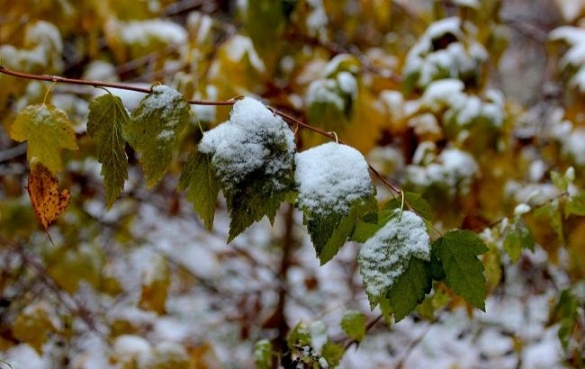 Вже зима. В Черкаській області дочекалися першого снігу