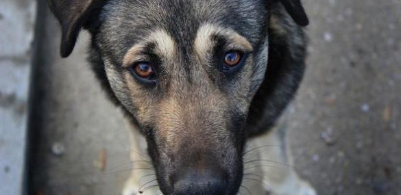 Канада рятуватиме безпритульних тварин Черкащини