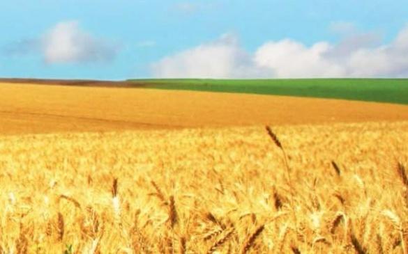 Україна стане державою підприємців*