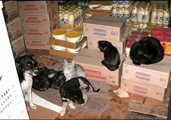 В одному з продуктових магазинів у Черкасах власники влаштували притулок для тварин