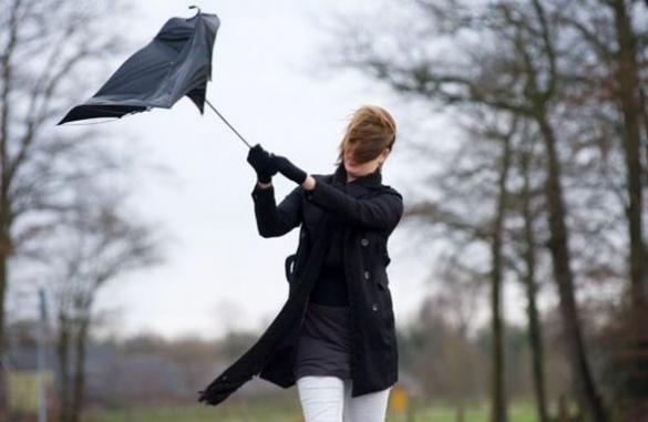 Черкащан попереджають про сильний вітер та закликають не ходити попід деревами