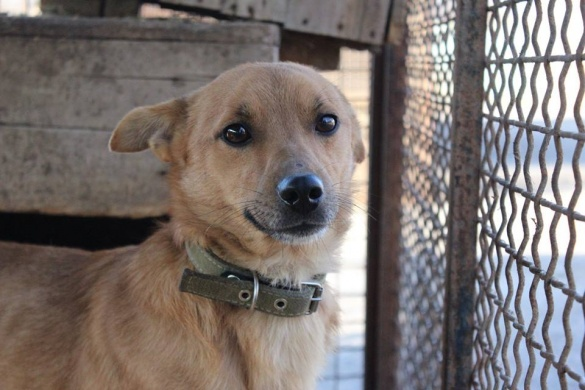 У Черкасах шукають домівку для знаменитого собаки, який два роки прожив у туалеті