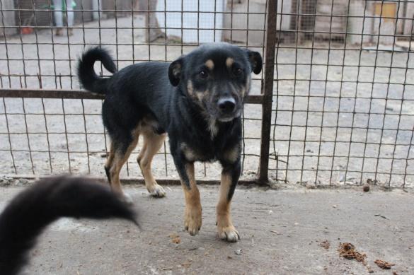 Черкаські волонтери шукають господаря для веселого собаки (ФОТО)