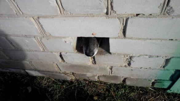 У Черкасах шукають власника гаража, у якому 5 днів сидить ув'язнений собака (ФОТО)