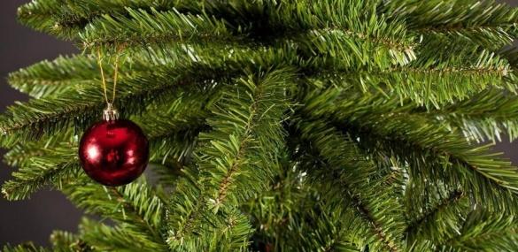 Переваги та недоліки: яку ялинку обрати на Новий рік черкащанам