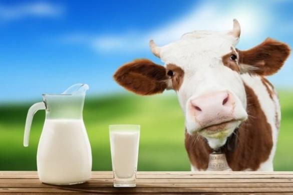 Черкащина серед лідерів із виробництва молока