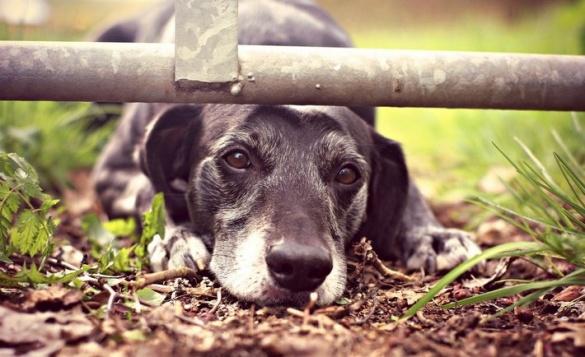 Думки черкаських депутатів щодо безпритульних тварин біля ЦДЮТ розділилися