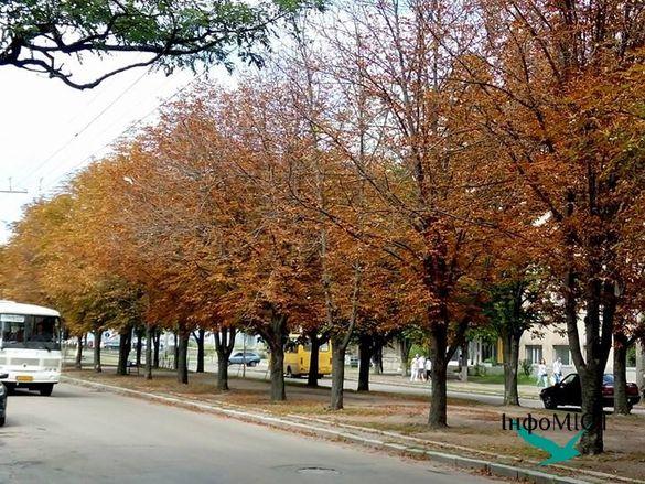 Міль чи хімічні опіки? У Черкасах серед літа пожовтіло листя каштанів (ФОТО)