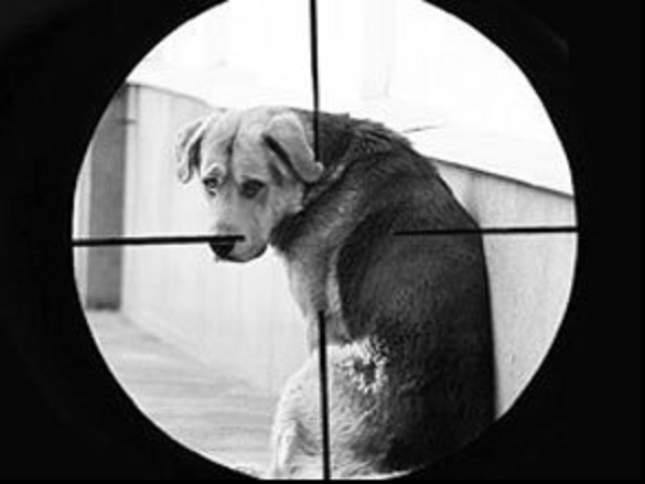 На Черкащині викрили живодерів, які вистрілювали собаку (ФОТО)