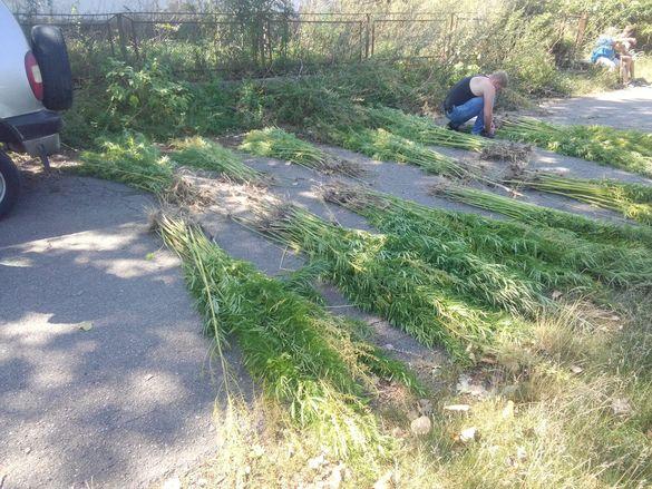 Черкащанин висадив у себе на городі близько шістсот рослин коноплі (ФОТО)