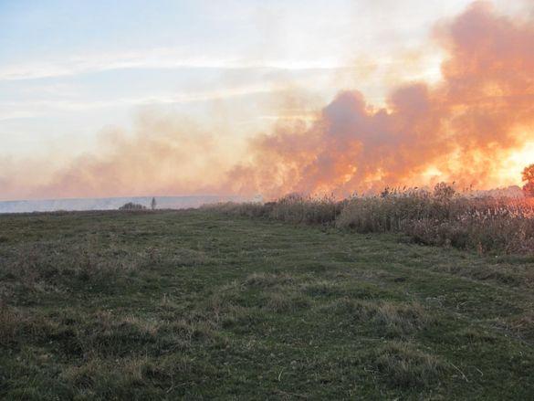 У Черкаській області сталася масштабна пожежа - горіло поле