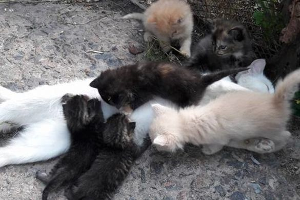 Черкащани рятують кішку-годувальницю, якій нелюди розтрощили мордочку