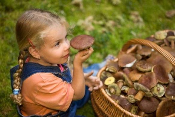 Черкаські рятувальники застерігають про небезпеку отруйних грибів
