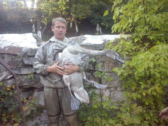 На Черкащині врятували лебедя (ФОТО)