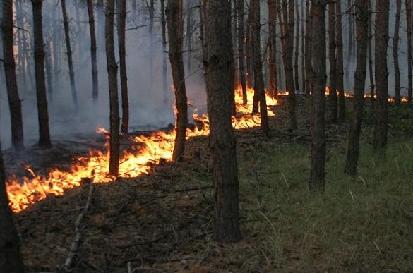 На Черкащині грибники спричинили масштабну лісову пожежу (ВІДЕО)