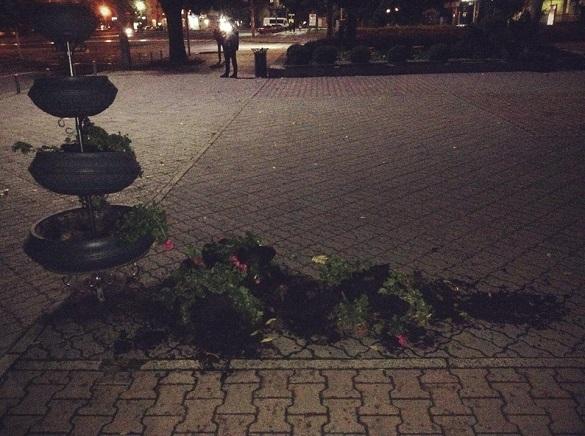У центрі Черкас вандали потрощили клумби (ФОТО)