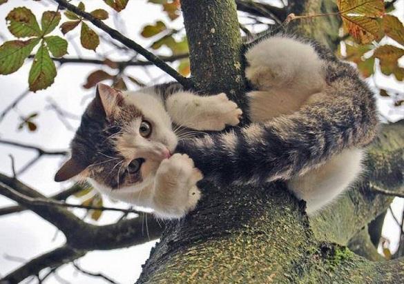 Допомога чотирилапому: як на Черкащині кота від біди рятували