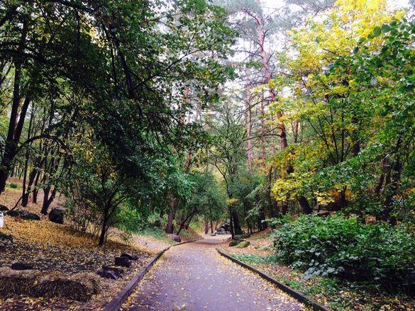 Золоте листя, шум дерев, чисте повітря: 10 крутих осінніх фото із черкаського парку