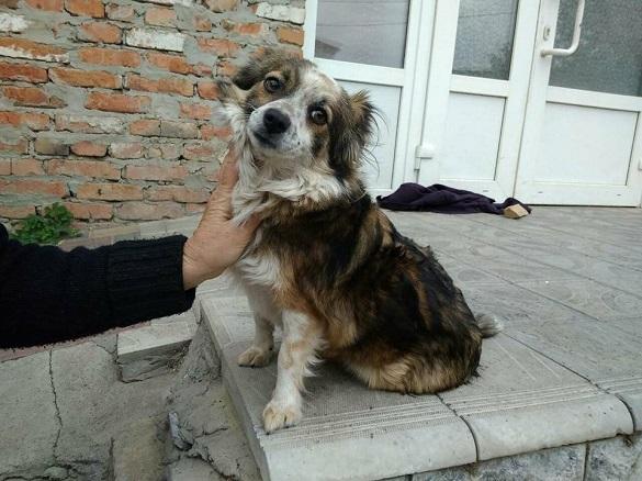 Уманським безпритульним собакам знайшли домівку в Європі
