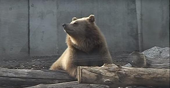 Теплі вольєри, поживна їжа та обійми: мешканці черкаського зоопарку готуються до зими