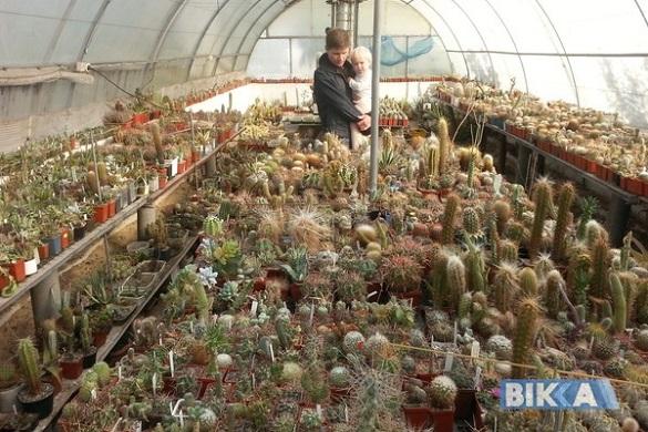 Черкащанин тримає вдома тисячі кактусів (ФОТО)
