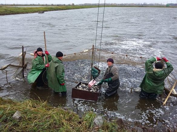 У Кременчуцьке водосховище випустять понад 74 тонни риби