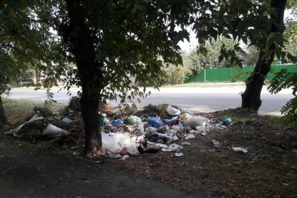 Люди та свині:  чому в Черкасах виникають стихійні сміттєзвалища?