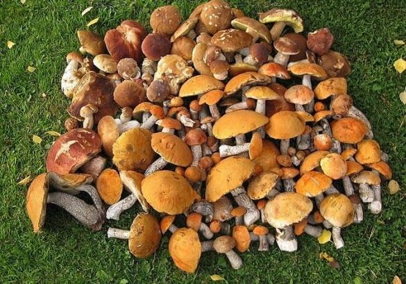Сімейна пара із Черкащини отруїлася грибами