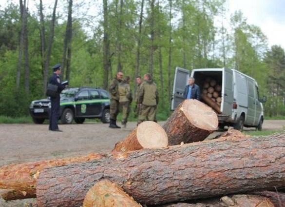 Дозволив вирубати дерева: у Черкаській області сільського голову підозрюють у корупції