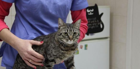 Черкаські лікарі врятували кота від евтаназії
