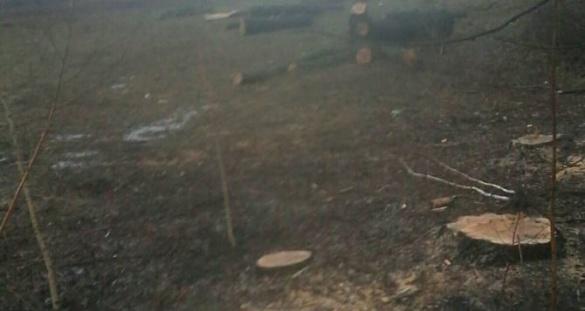 У Дахнівці невідомі незаконно позрізали дерева