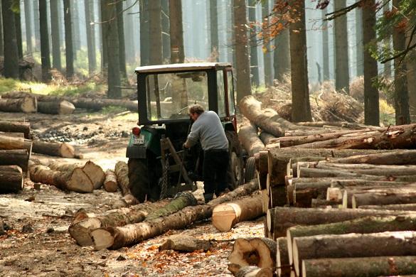 Вирубав дерев на 23 тисячі: черкащанин за порубку дерев на території заказника постане перед судом
